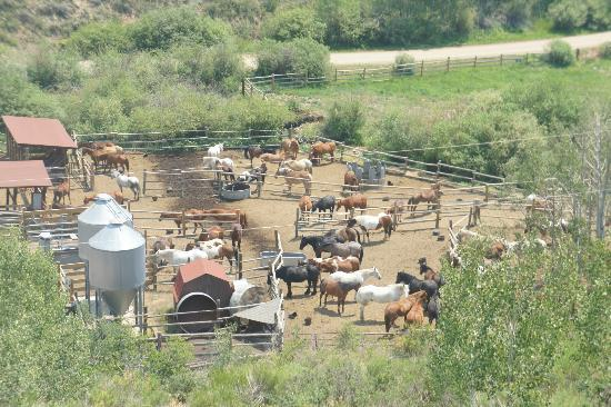 Drowsy Water Ranch: Horses