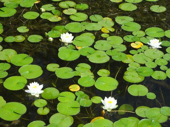 Spa Eastman: Lily pads