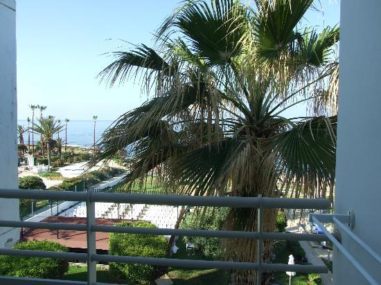 Louis Ledra Beach: palm tree that you can touch from balcony