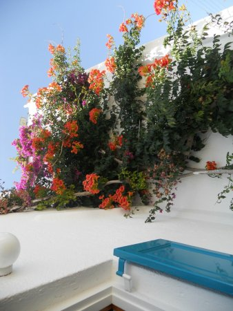 Cyclades Studios: The flora surrounding room 6