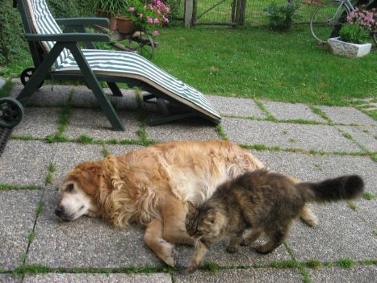 Silenzio e Buio: cane e gatto...
