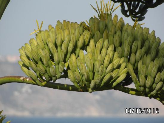 Iberostar Malaga Playa: la flore d'andalousie