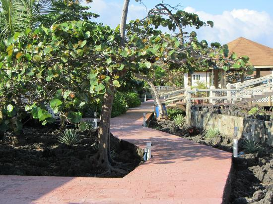 Seagrape Plantation Resort: walkway in front of bungalows & to the pool