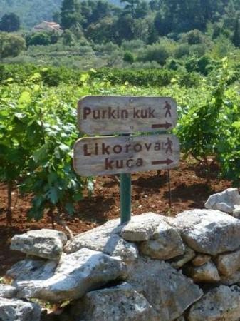 Stari Grad, Kroatia: Sign post to look for on your way towards Dol to find Purkin Kuk trail