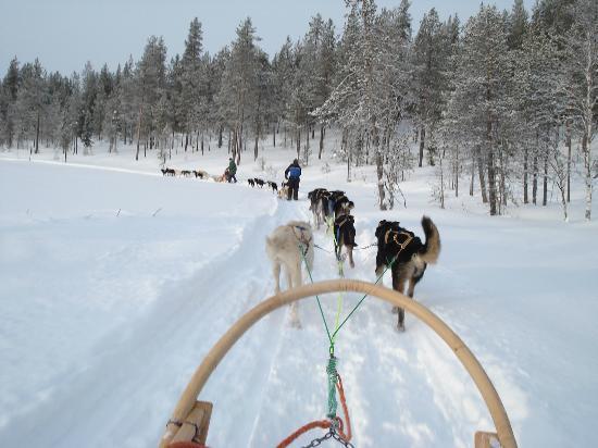 Original Sokos Hotel Kuusamo: husky dog sledding
