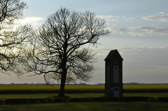 Gingst, Germany: Blick auf das Rapsfeld
