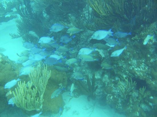 Dive Tulum: Lago Akulum