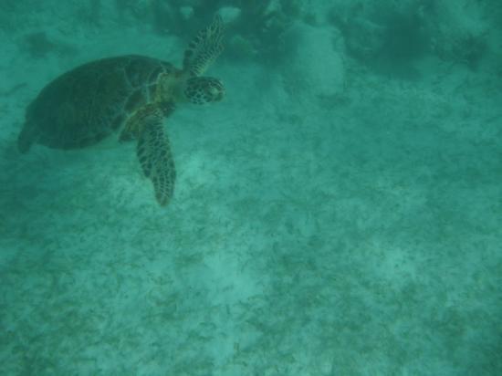 Dive Tulum: Playa Akulum