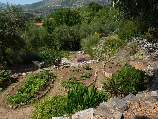One Foot on the Mountain: A view over the garden