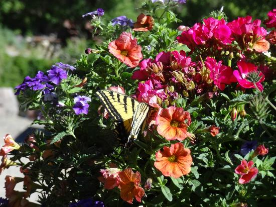 Box Canyon Lodge & Hot Springs: Butterfly