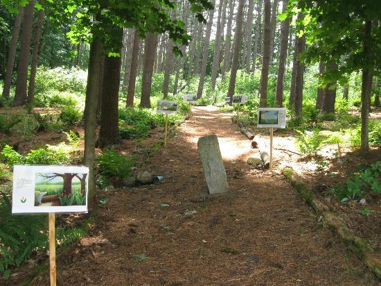 Bennington Museum : woodland trail behind museum