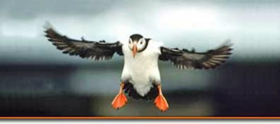 Cap'n Fish's Puffin Nature Cruises : close fly by