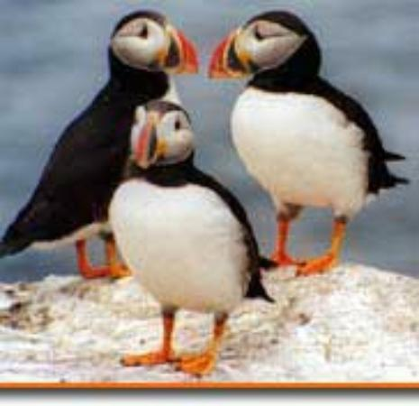 Cap'n Fish's Puffin Nature Cruises