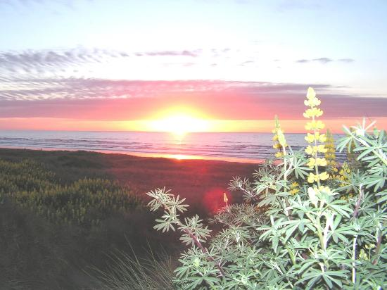Windy Waves Bed and Breakfast: Waitarere Sunset