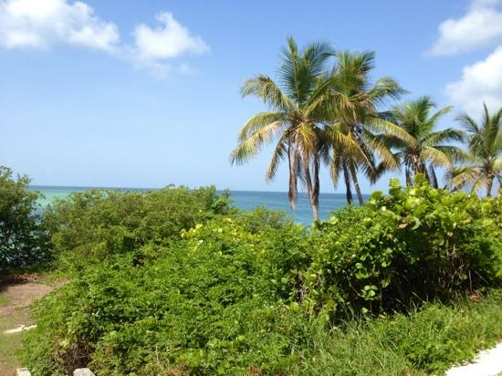 big pine key big and beautiful singles Florida keys resorts big pine key hotels  however plenty florida keys resorts will include breakfast with evening  the grounds are simply beautiful here,.