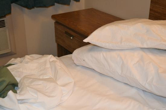 Swiss Cottage Inns : Bed bug on pillow
