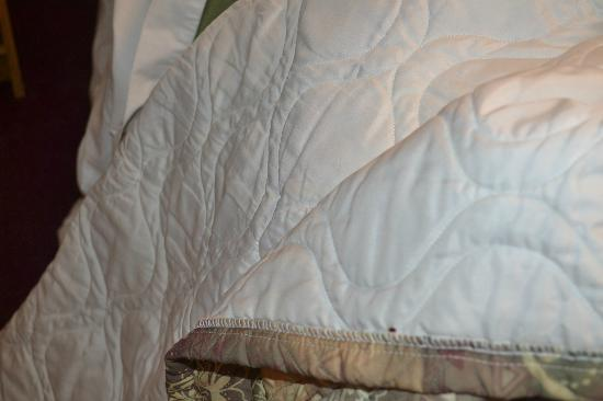 Swiss Cottage Inns: Bed bug on bedding