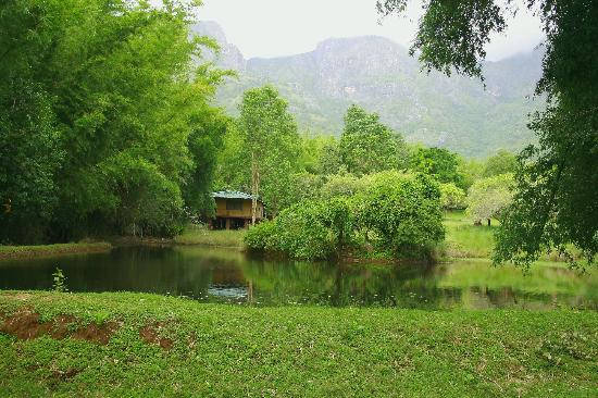 Jungle Hut: wish i had a hut in the woods