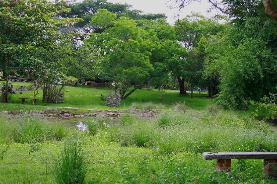 Jungle Hut: green around u