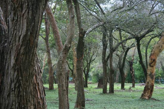 Jungle Hut: within nature