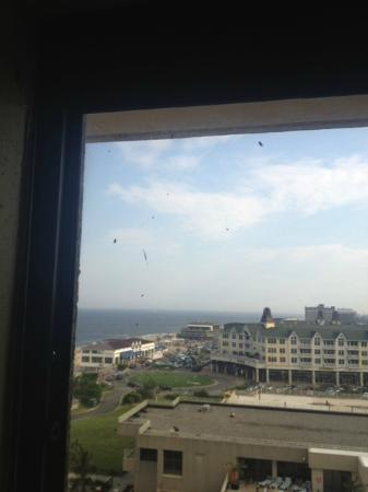 Ocean Place Resort & Spa: Bugs in the room, after I had already wiped them off a few minutes earlier