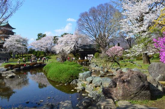 Takashima Castle: 天守閣が少し見えてます