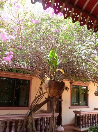 Lotus Lodge: Outside the room