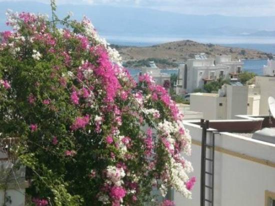 Hotel Beliz: view