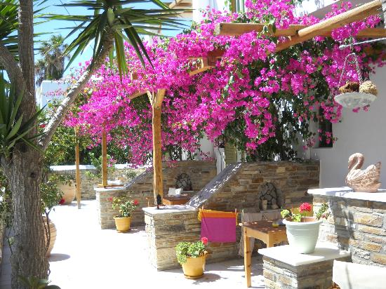 Aegeo Inn: Beautiful bougainvillea on the lovely patios