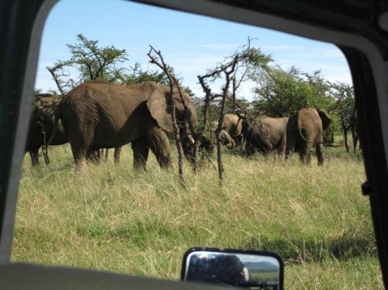 Encounter Mara, Asilia Africa: Seeing elephant up close and personal