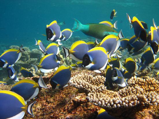 Diving Bluetribe Moofushi: Coloured fish! I think Angel fish...!