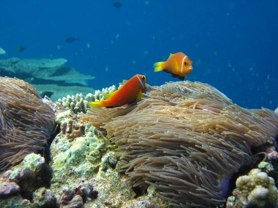 Diving Bluetribe Moofushi: Nemo!