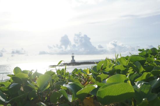 سووان بالم ريزورت: view from the beach