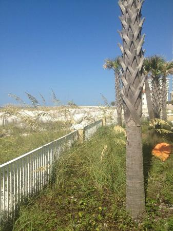 Emerald Isle: View down the beach from the pool deck