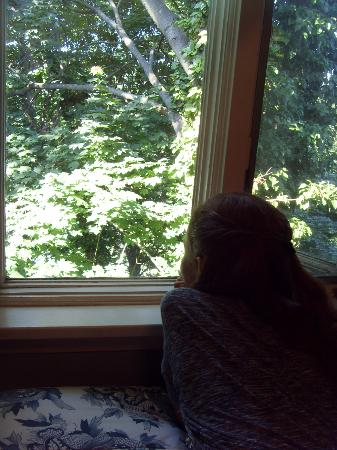 Hilltop Bed and Breakfast: My girl enjoying the beautiful treetop view from the room.