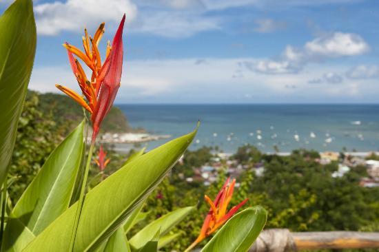 Pelican Eyes Resort & Spa: La Canoa Ocean View