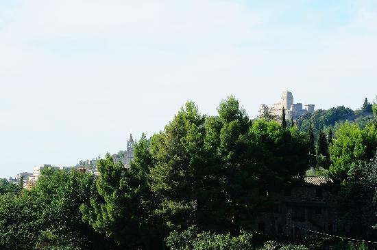 Agriturismo Colle degli Olivi: panorama