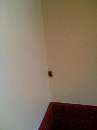 Comfort Suites Jacksonville: Roach in room 207