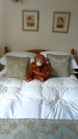 Ash House Hotel: even my monkey loved the bed