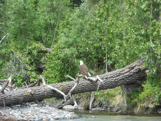 Denali Southside River Guides : One of our wildlife views