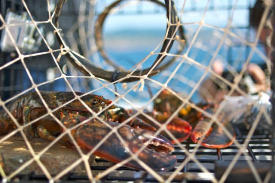 On the Sea with the Coastal Fishermen Day Tours : Prisonnier de la cage!