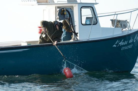 On the Sea with the Coastal Fishermen Day Tours : Allez hop les apprentis pêcheurs, on met la main à la pâte!