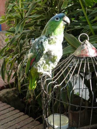 Hotel Casa Arnel : Wolf whistling parrot
