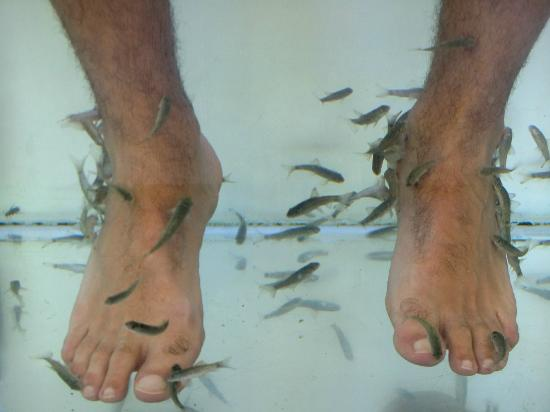 My feet being assaulted picture of doctor fish foot for Garra rufa fish pedicure locations