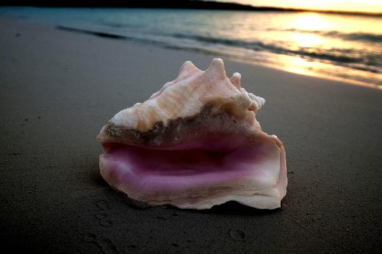 Coral Gardens: Conch and a sunet right in our backyard, Hooper's Bay