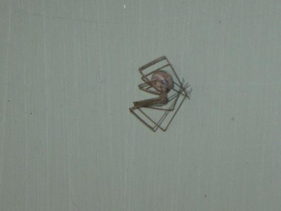 Apple Creek Cottages: one of the spiders in the cottage