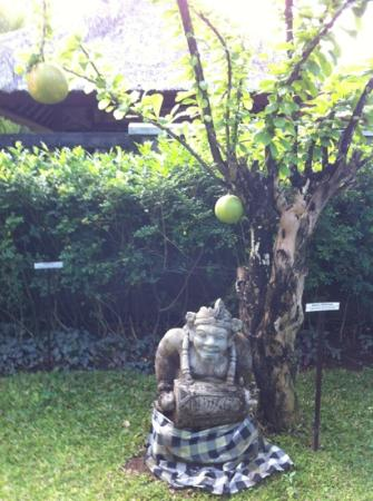 Bumi Linggah The Pratama Villas: Garden with huge Balinese oranges growing on trees