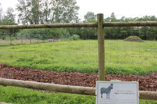 Greater Vancouver Zoo: Ein (!) einziges Zebra