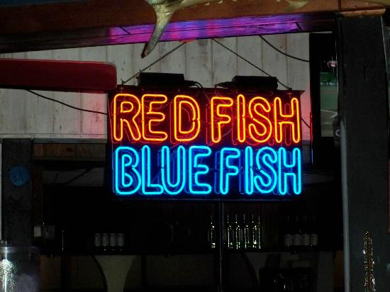 Bar sign picture of red fish blue fish key west for Red fish blue fish key west