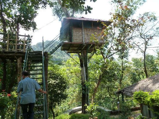 Eco Exotica Holidays : Tree House